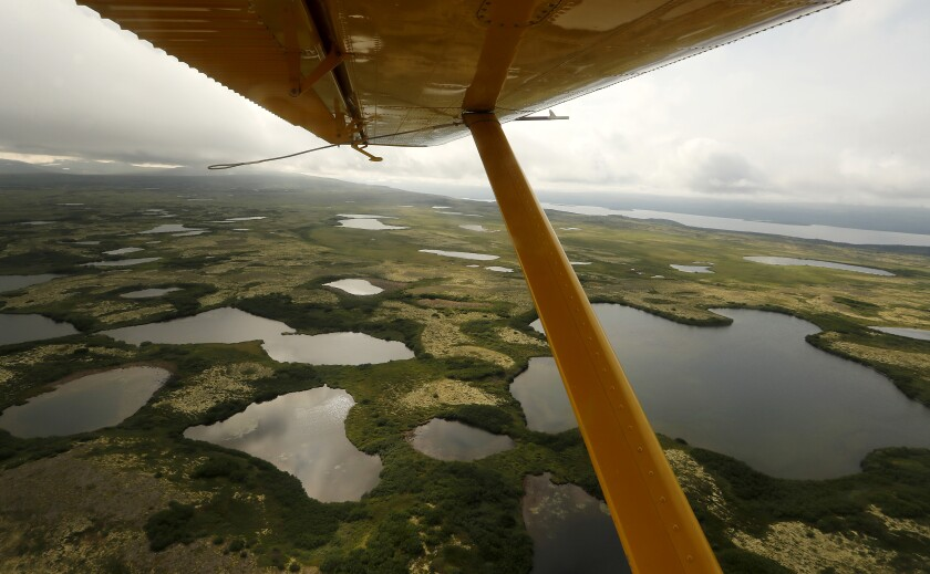 Lakes fan out beneath the wing of a float plane as it flies above tundra in July near the site of Pebble Mine in Alaska.
