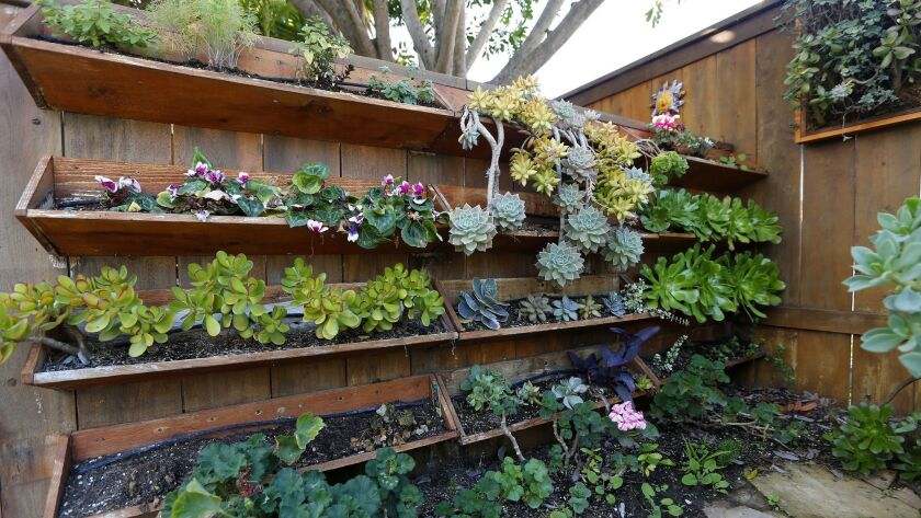 Planters hang on shelving mounted on a fence in Tom Green's backyard.