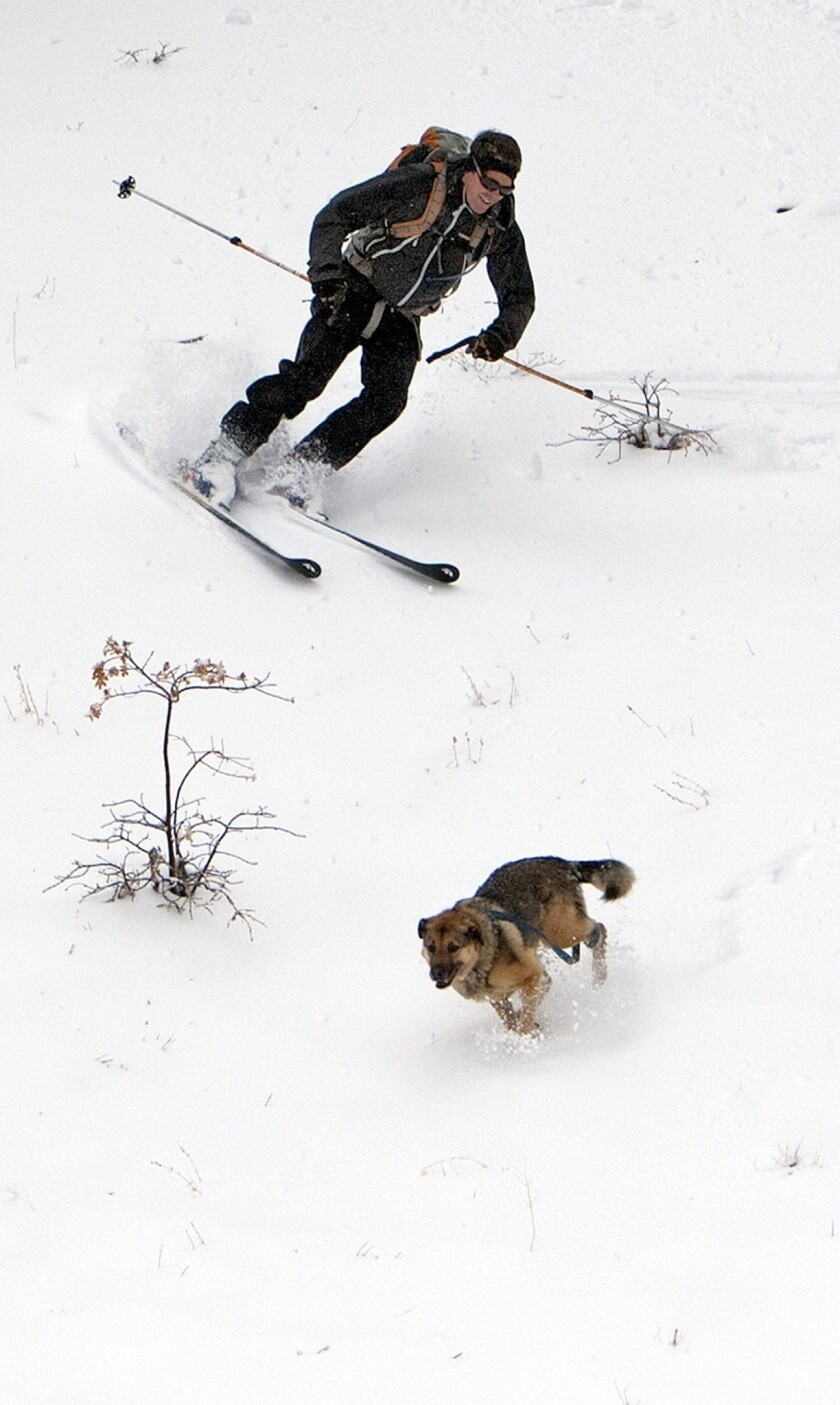 Chris Rusay of Eagle Rock with his dog Wyatt skis down a backcountry slope off Highway 2 in Wrightwood.
