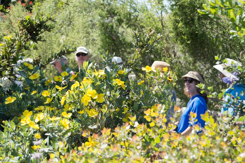 One of a dozen private gardens featured in the California Native Plant Society's San Diego tour.