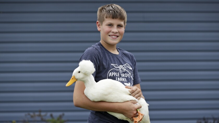 Payne Steffan poses for a photo with his duck, Arlo, Tuesday, Sept. 1, 2020, near Jenera, Ohio. Steffan is sad he won't get to show off his ducks or get to impress the judges with how much he knows. The Hancock County Fair was cancelled due to the coronavirus. (AP Photo/Tony Dejak)