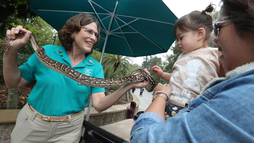 LOS ANGELES, CALIF. -- TUESDAY, JUNE 25, 2019: Los Angeles Zoo docent Paula Riggin holds a python f
