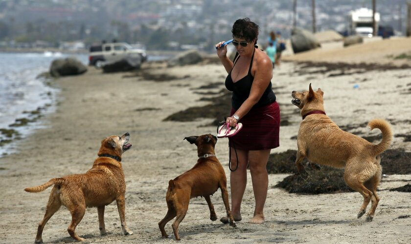 Dog care is happy business - The San Diego Union-Tribune
