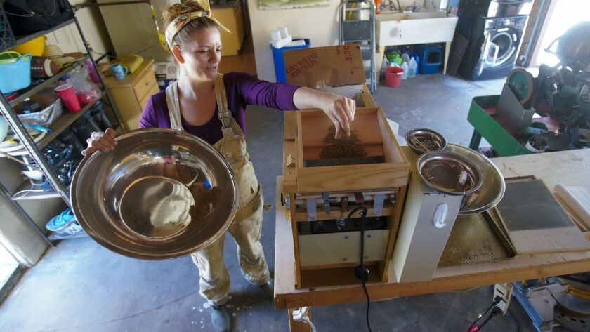 Brijette Pena, owner of the San Diego Seed Company runs a seed machine that separates the seeds befo
