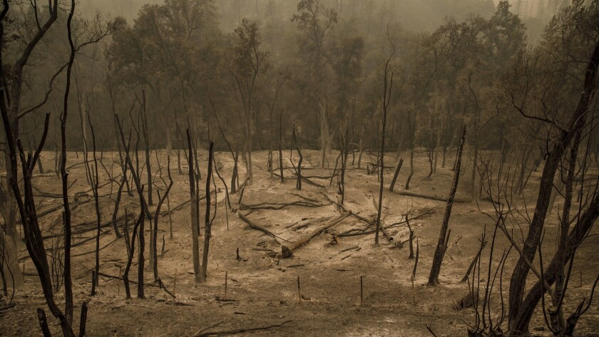 A landscape is charred by the spread of a wildfire outside Redding on Sunday.