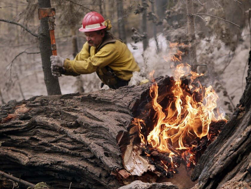 Tracy Porter, of Paradise, Calif., uses an axe to fragment a burning tree damaged by the Eiler Fire on Monday, Aug. 4, 2014, in the Lassen National Park near Hat Creek, Calif. Firefighters were focusing on two wildfires near each other in Northern California that have burned through more than 100 s