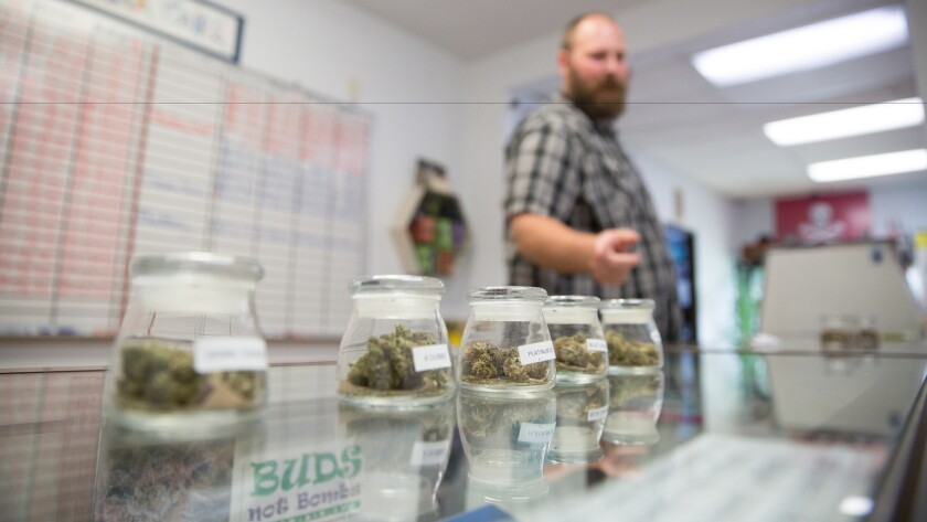 A cannabis sales consultant at work in Sacramento