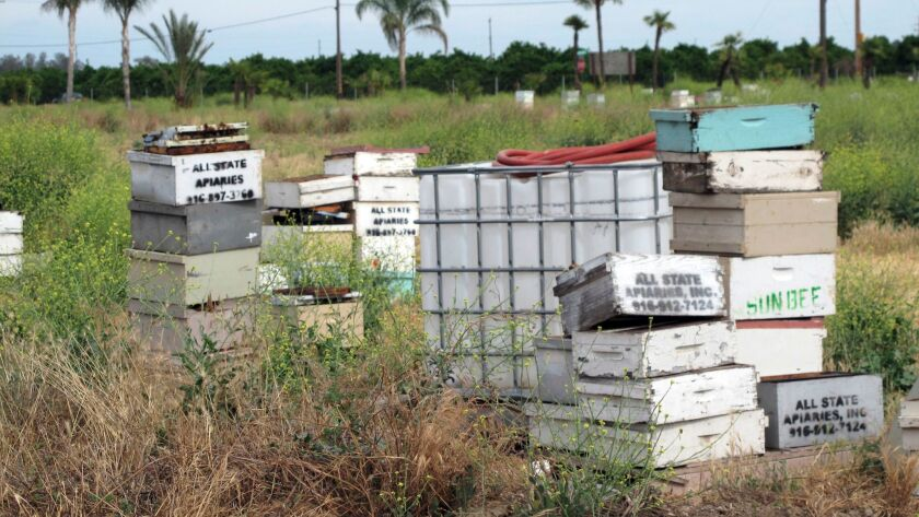 In this May 16 file photo, several of the thousands of recovered beehives stolen in California are shown near Sanger, Calif.