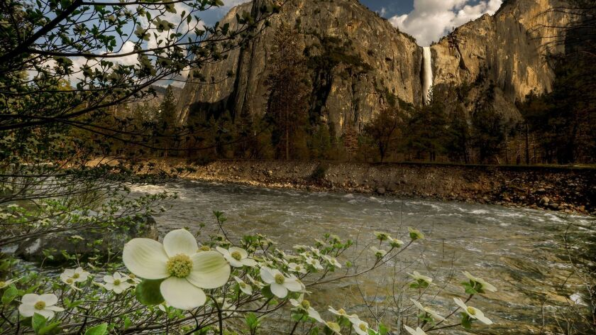 Bridalveil Fall in Yosemite Valley is booming, the dogwoods are blooming, and the roaring Merced River prompted a flood warning earlier this week. The road to Glacier Point opens Thursday, where snowy conditions still prevail.