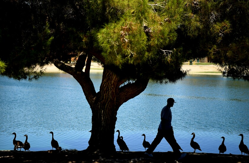 A man walks under a tree at Apollo Community Regional Park in Lancaster on Tuesday.