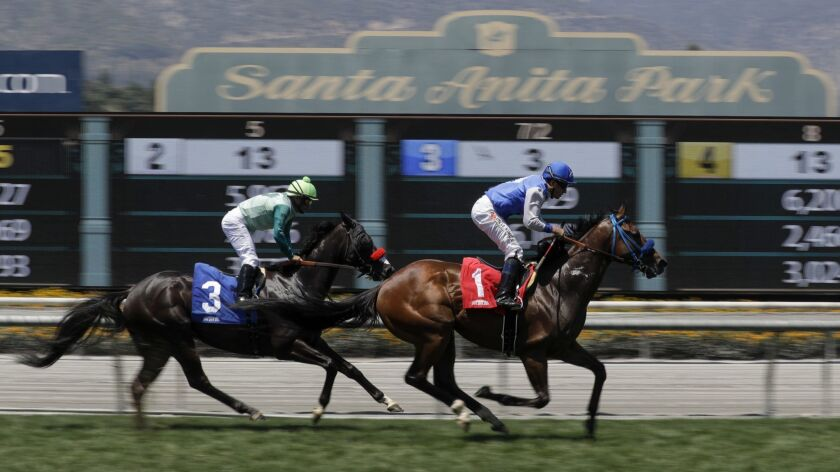 Statistics might not tell the whole story about horse racing