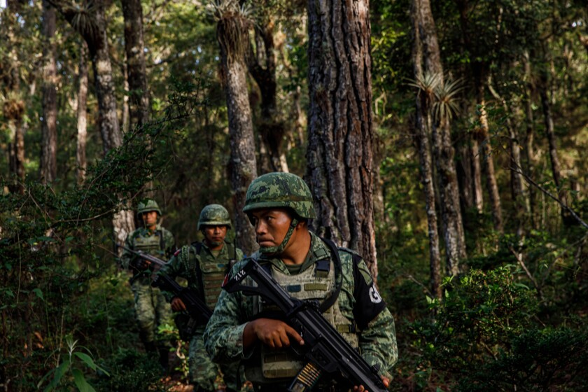 Members of the Mexican national guard search for signs of undocumented travelers near Comitan, Mexico, in June.