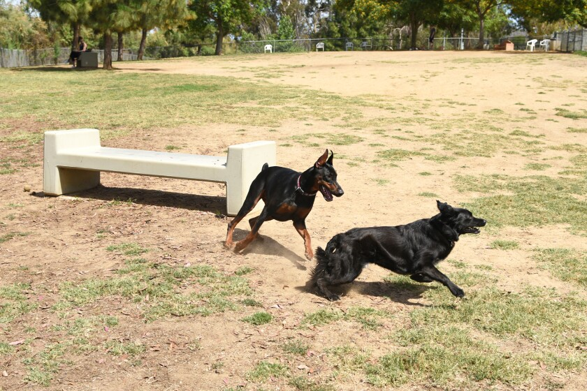 RB Dog Park June 29, 2019