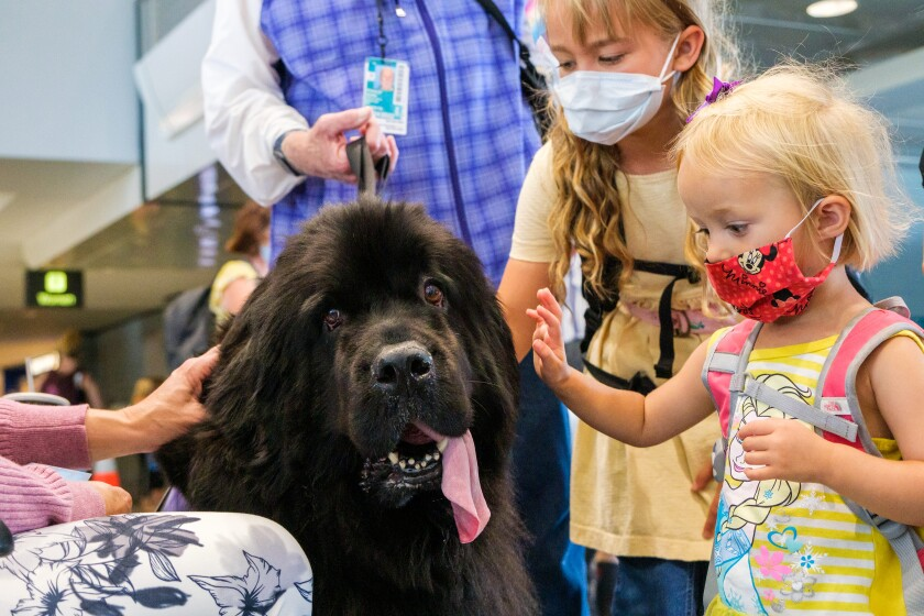 Children pet an airport therapy dog.