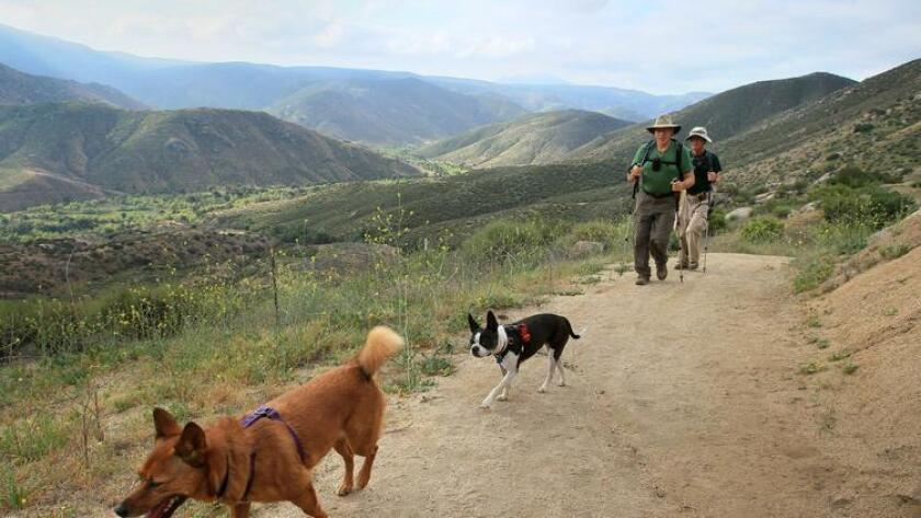 Grab your four legged friend and get outside for a hike. (Charlie Neuman)