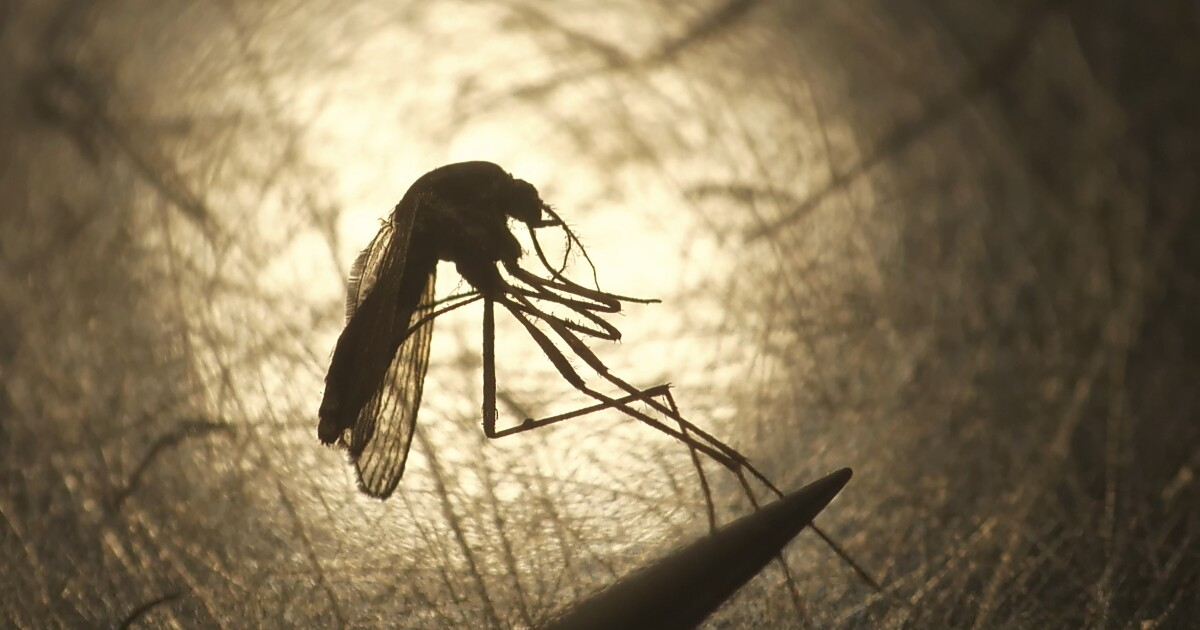 Photo of Column: COVID isn't spread by mosquitoes. But the next pandemic might be