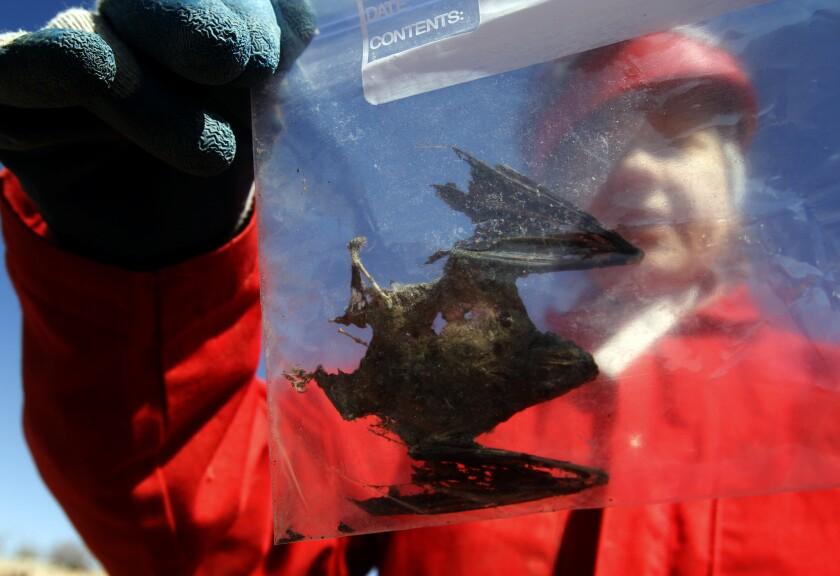Bat epidemic