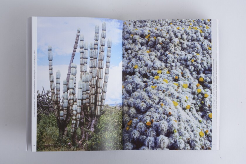 """Image from the Hat & Beard book """"Xerophile: Cactus Photographs from Expeditions of the Obsessed."""""""