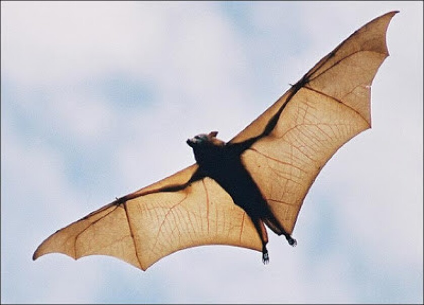 Bat Chats is at the Agua Hedionda Lagoon Oct. 22 and Not So Scary Estuary is at the San Elijo Lagoon Oct. 23.