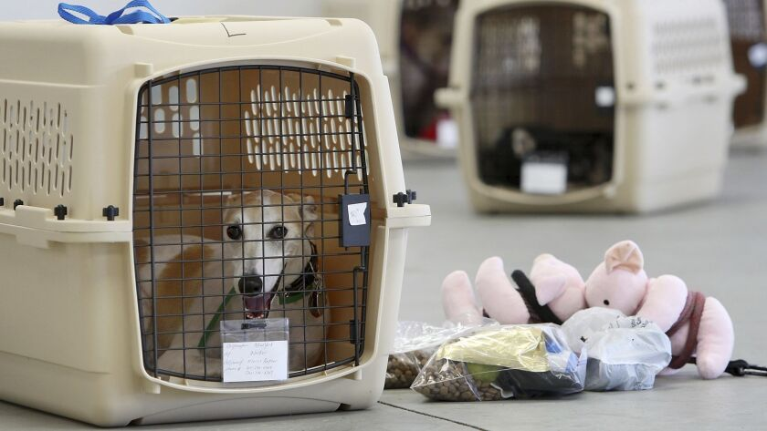 A dog sits in its crate at an airport in 2009.
