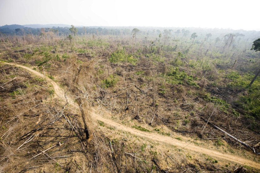 This aerial picture taken on Nov. 29, 2009 shows a sector of the Amazon forest, in the state of Para, in northern Brazil, illegally deforested.