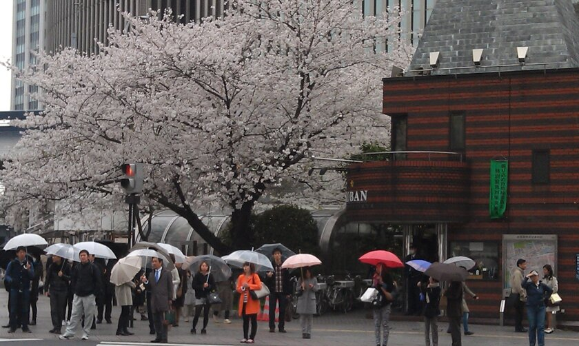 Spring comes to Tokyo's Ginza