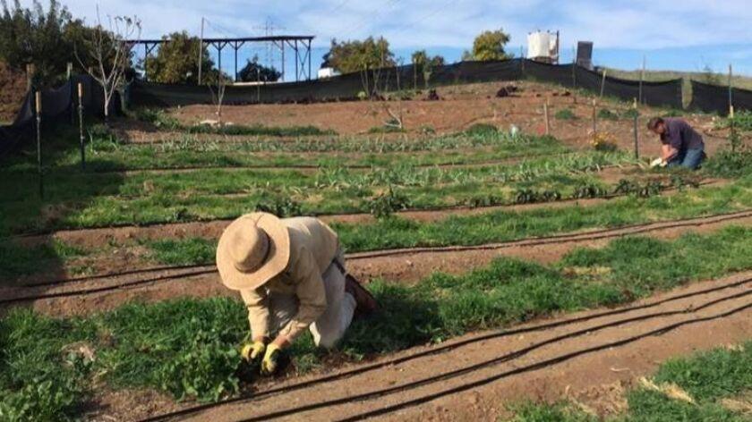 Nopalito Farm & Hopyard in Valley Center