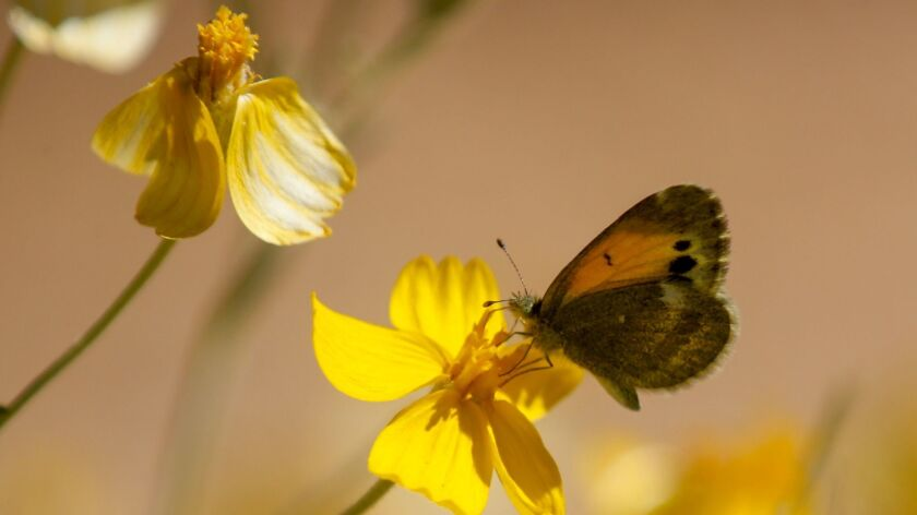 A butterfly lands on the foliage along the Mica View trail in Saguaro National Park near Tucson, Ariz.