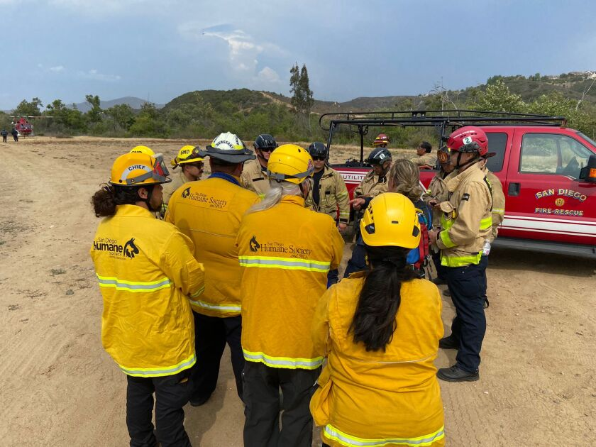 San Diego firefighters and the San Diego Humane Society work Thursday on a plan to rescue Mackey the horse in Carmel Valley