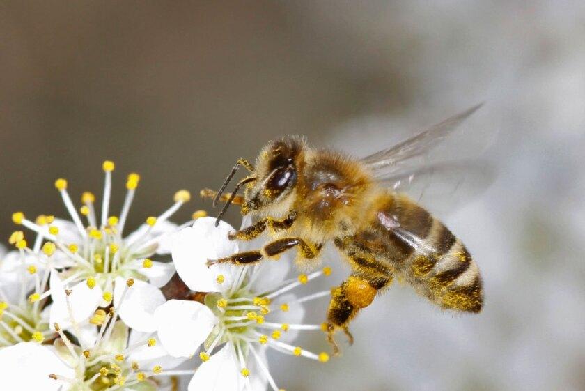 Honey Bee Colony Collapse