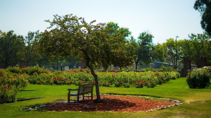 chair whit tee in Rose Gardens