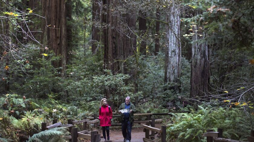 SAN FRANCISCO, CALIF. -- WEDNESDAY, NOVEMBER 11, 2015: Visitors on the Fern Creek Trail walk among