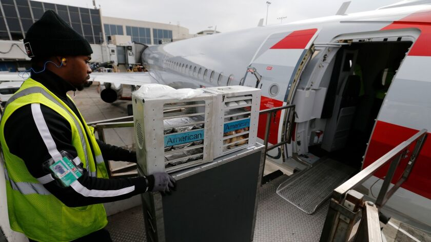 A food service worker loads food carts aboard an American Airlines flight to Orlando at Los Angeles International Airport. The airlines has returned to using Gate Gourmet, a catering company that was found to have listeria in its floor drain.