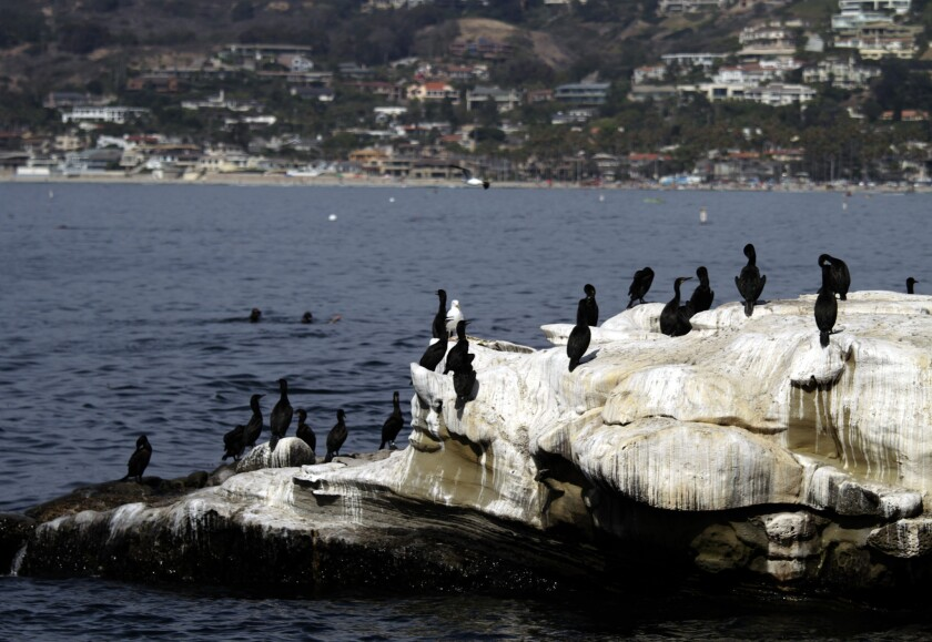 Birds sit on the rocks at La Jolla Cove. The stink left behind has sent visitors fleeing and caused restaurants and hotels to lose money, a lawsuit alleges.