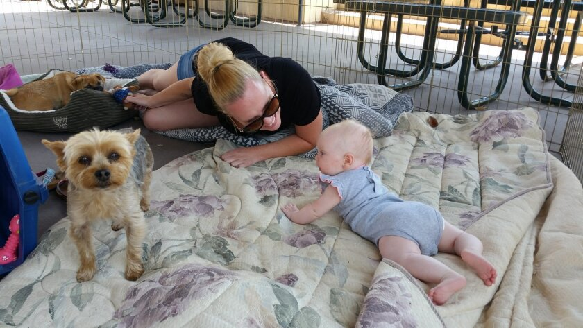 Nichole Hinkle crawled inside the portable fencing for her dogs to play with her 4-month old baby, Dakota, at the Los Coches Middle School evacuation shelter Wednesday. They evacuated from their Lake Morena Village home on Tuesday as the Border Fire advanced.