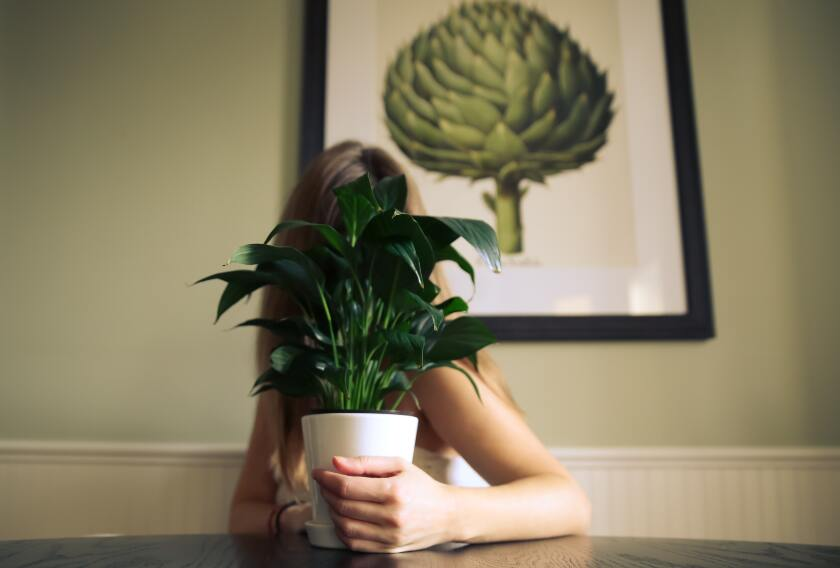 A woman with a houseplant.