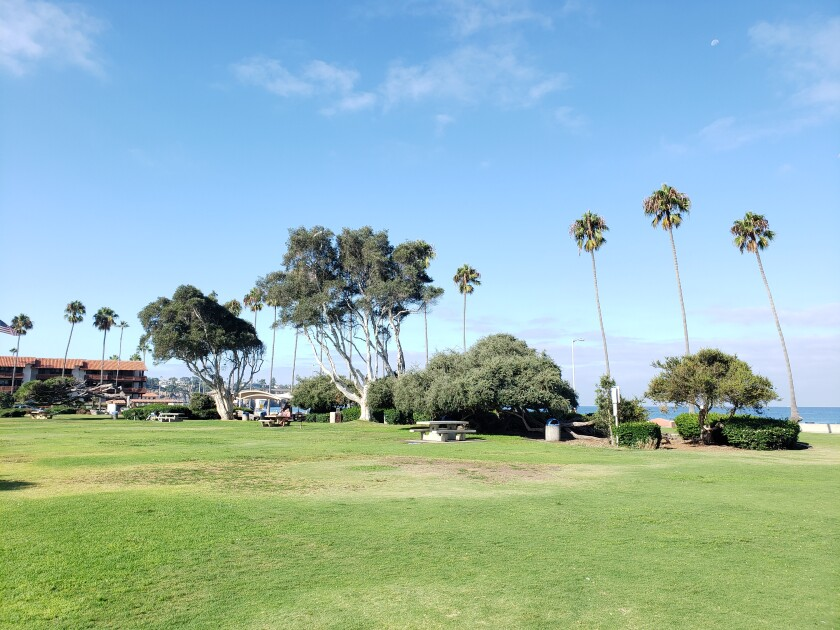 Proceeds from the La Jolla Sunrise Rotary Club's upcoming luau fundraiser will replace trees as needed in Kellogg Park.