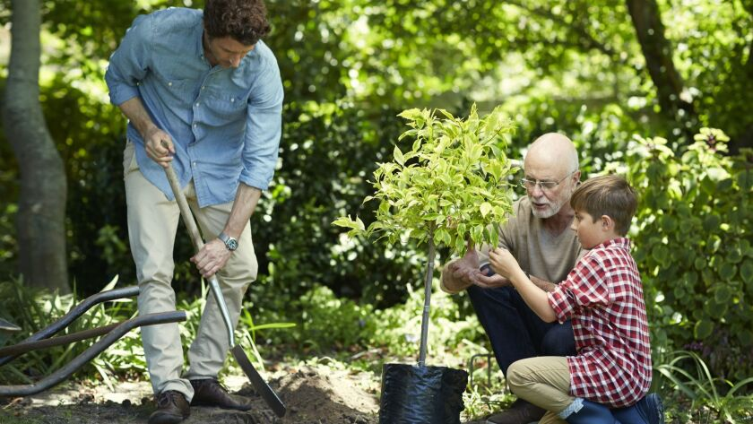 Make it a family activity to add trees to your garden this year.