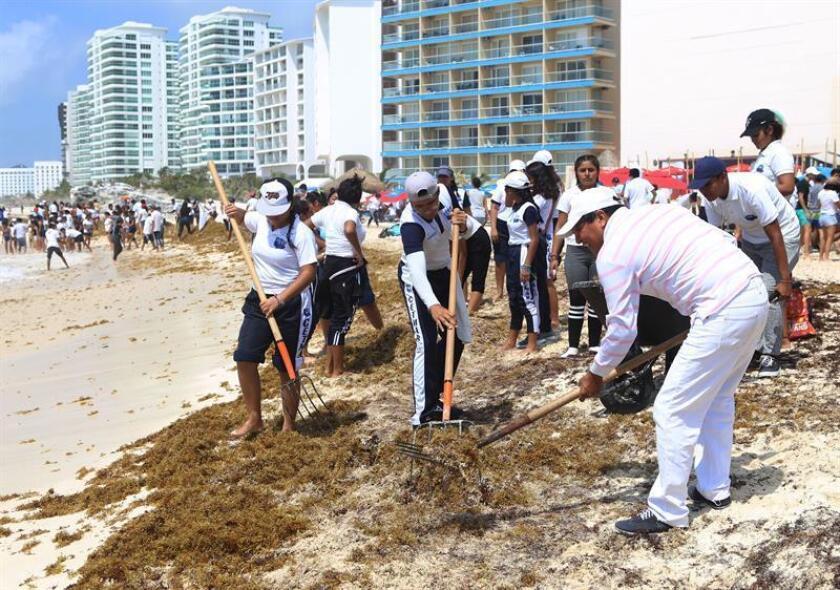 Zona hotelera de Cancún presenta recale masivo de sargazo
