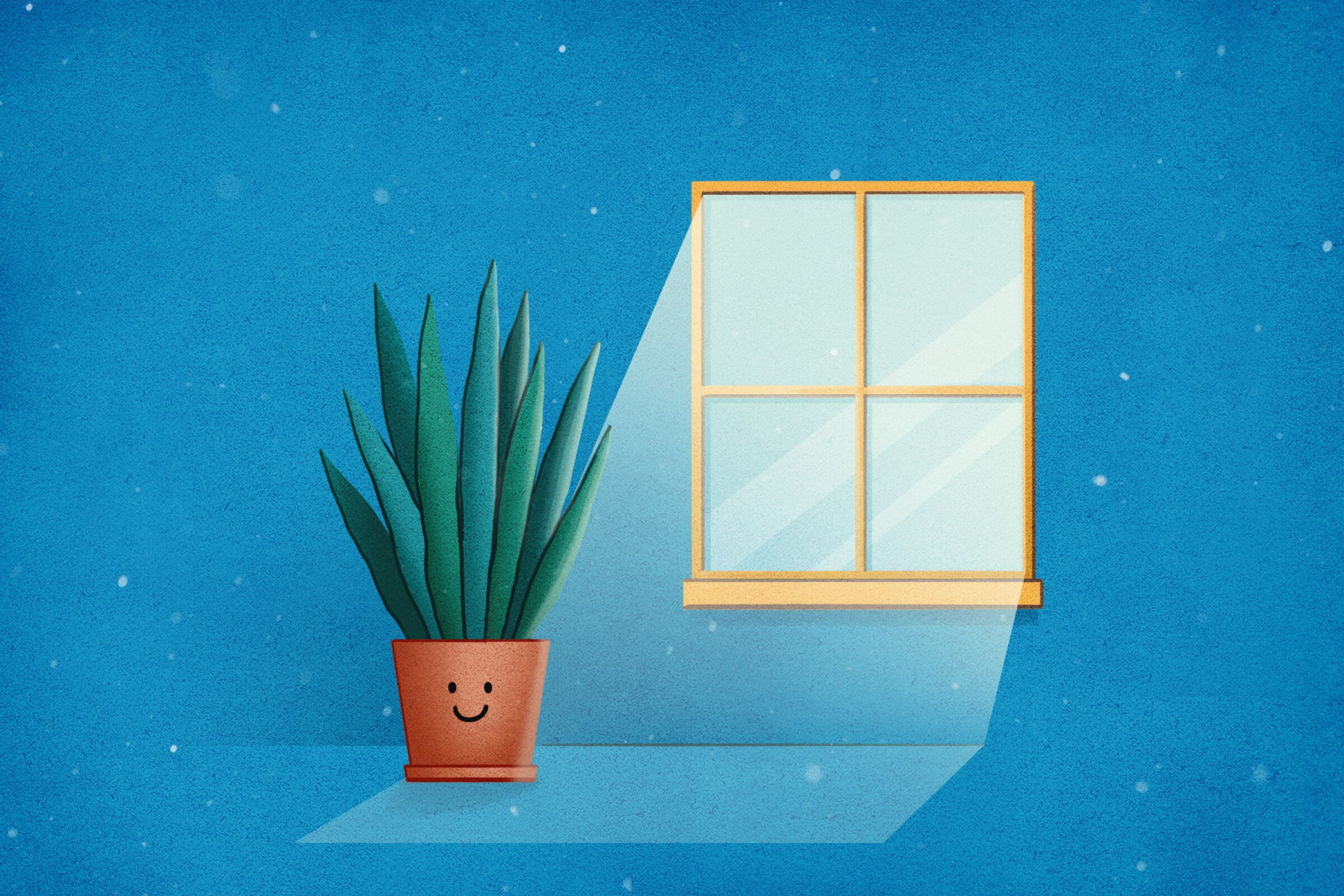 What are indoor plants that don't need a ton of light? - Los Angeles Times