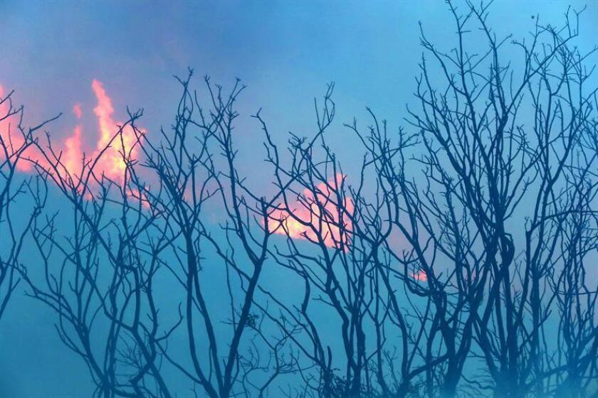 """El incendio forestal """"Ute Park Fire"""" al noreste de Nuevo México ha motivado hoy la emisión de órdenes de evacuaciones de zonas pobladas por el riesgo que supone el fuego, que hasta el momento cubre un área de 16.500 acres. EFE/Archivo"""