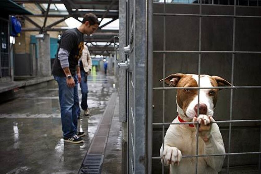 Officers Ramon Muniz and Kim Lormans of the Los Angeles Police Department Animal Cruelty Task Force walk through the North Central Animal Shelter dog kennels looking for animals that might have been fighting or abused.