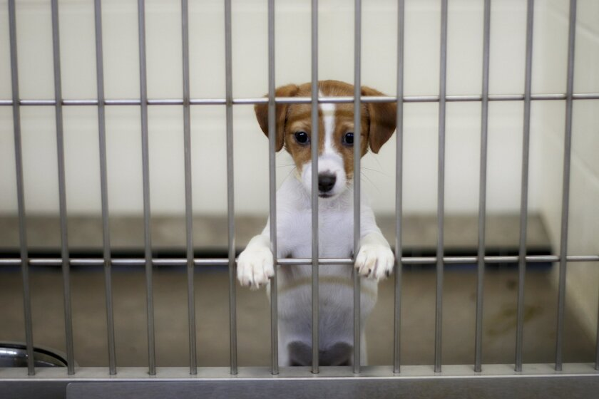 In advance of Independence Day revelry, San Diego County Animal Services and the San Diego Humane Society are offering tips to keep your dog from ending up at a shelter, or loose on the streets.