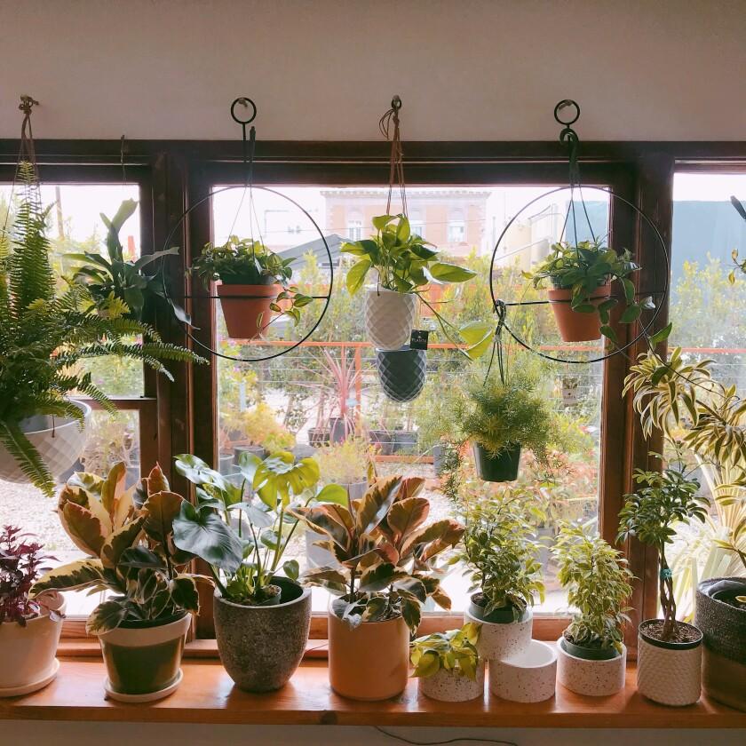 Planta Nursery in Highland Park.
