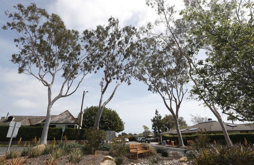 The city of Laguna Beach was just named a Tree City USA community for the third year in a row.