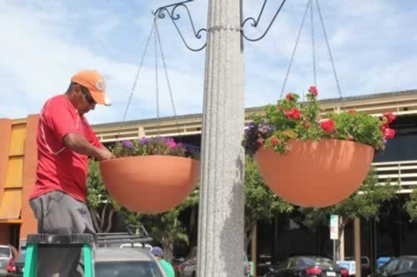 Kudos to La Jolla Village Merchants Association for adding these splashes of living color to the around town.