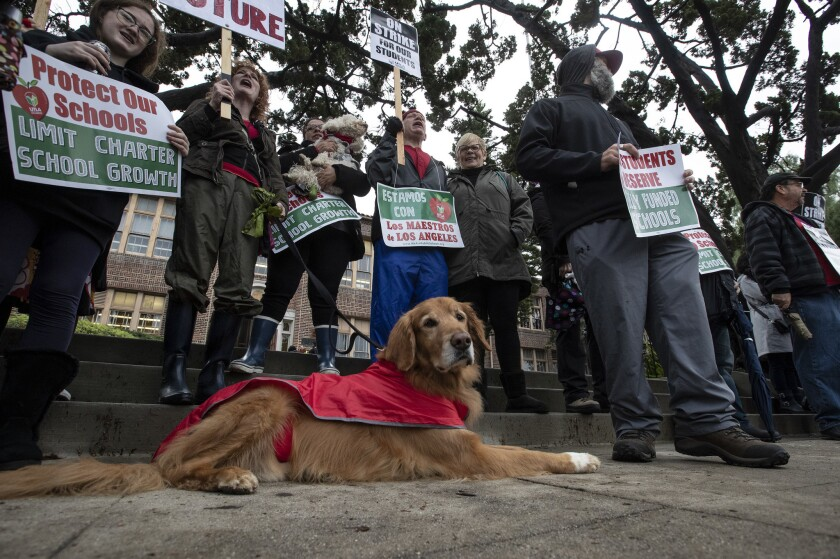 Fenton, a golden retriever therapy dog for children, joined striking teachers on the picket line at Burroughs Middle School on Tuesday.