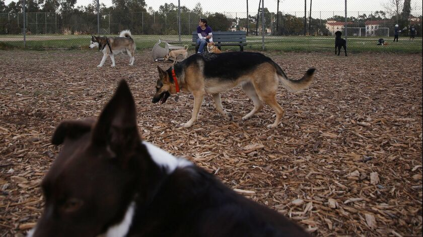 BRENTWOOD, CA - Jan. 28, 2016: The Brentwood dog park on a Friday evening. The park is a flashpoint