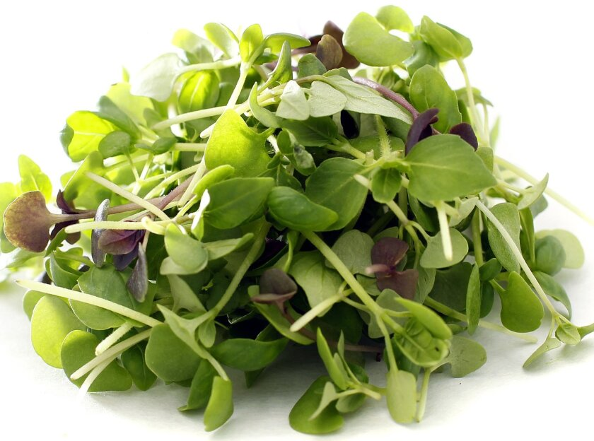 Micro Basil Nutmeg has appealing, bright green leaves that release a unique fragrance.