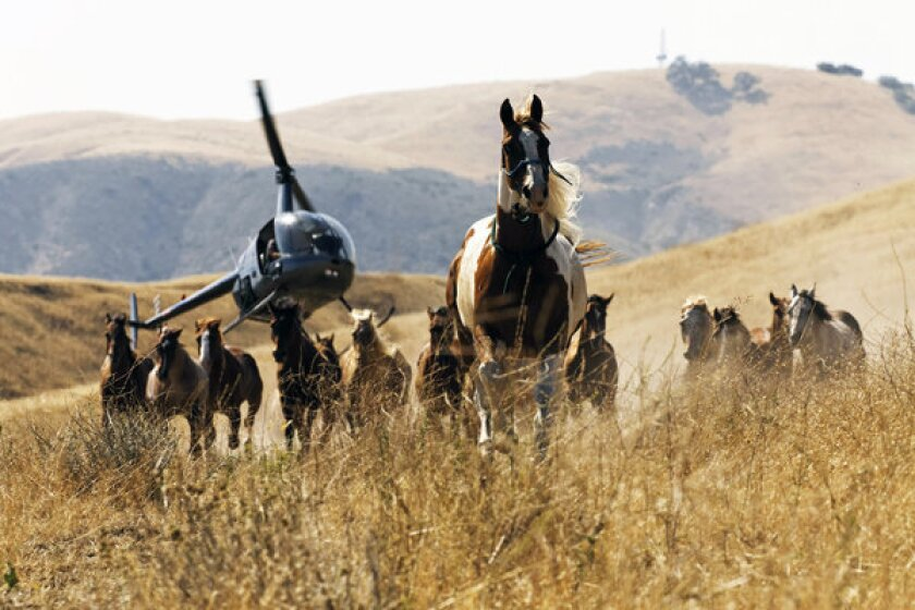 """Magnificent 'Wild Horses"""" at the Palm Springs ShortFest"""